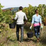 Settore agricolo cresce il lavoro