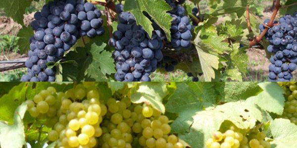 Future natural, Naturae et Purae al Merano WineFestival