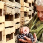 Ristorazione parigina con i vini di Corte Sant'Alda