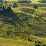Clima, adattamento della viticoltura nelle Langhe