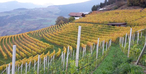 Valle Isarco, produttori di vino, progetto EisacktalWein