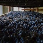 Anteprima Amarone, Valpolicella, un grazie ai produttori