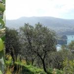 Sirena d'Oro, il premio per i migliori extravergini di oliva
