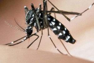 Zanzara tigre, piano per contrastarne la diffusione