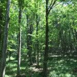 Genagricola, investe sulle foreste