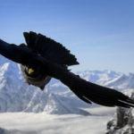 TAM, migrazioni uccelli attraverso le Alpi