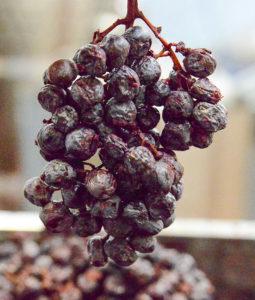 Acinatico, vino salutare riprodotto dalla Negrar
