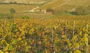 Disciplinari doc, vino, uve, vitigni
