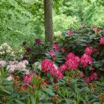 Piante forti e resistenti ai Giardini di Castel Trauttmansdorff
