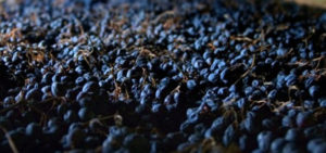Red Week Anteprima Amarone