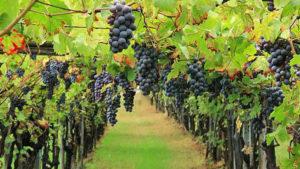 Wine, all'incertezza la certezza della propria organizzazione