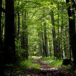 Ramberti nel bosco dei poeti