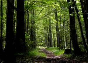 Ramberti, nel bosco dei poeti