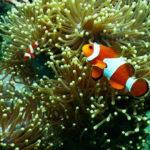 Barriera Corallina del Mediterraneo