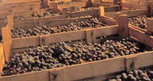 L'Amarone nell'alveo dei grandi vini