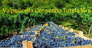 Consorzio Valpolicella approva bilancio