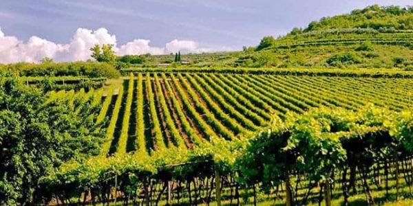 Tutela Vini Valpolicella, blocco impianti, richiesta del Consorzio