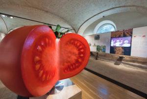 Parma, il pomodoro della Food Valley