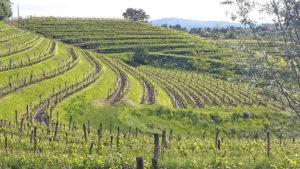 Bastianich, vini che si fanno ricordare
