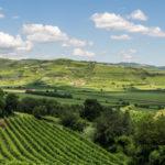 Modifiche disciplinari per Valpolicella, Ripasso, Amarone e Recioto