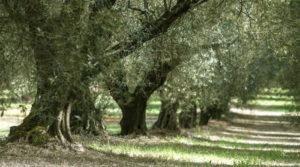 Passeggiate, tra gli olivi