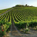 Vini Abruzzesi continua crescita