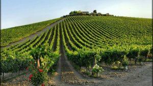 Vini Abruzzesi i continua crescita