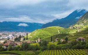 Consorzio Vini Alto Adige, ricco calendario per il 2020
