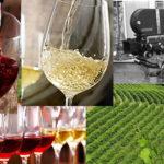 Regia del vino, il timore del contenuto vuoto