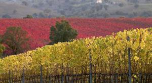 Bene con la Doc Maremma Toscana