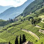 Vini Alto Adige abbassa la resa