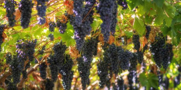 Valpolicella nuovo consiglio Consorzio Vini