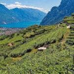 Wine Le Selezioni Cantina di Riva