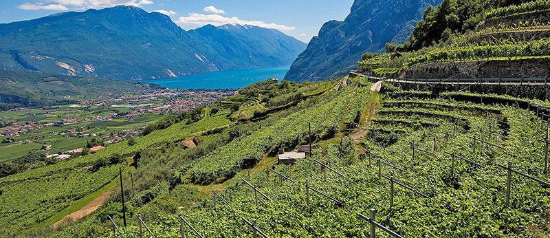 Wine Le Selezioni Cantina Riva
