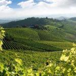 Associazione Vini Toscani  DOP e IGP