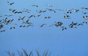 Influenza aviaria, persone infettate