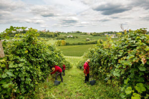 Pinot Grigio Santa Margherita