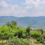 Cantina Valpolicella Negrar aderisce al progetto Mappiamo