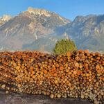 Dopo Vaia al Trentino manca legname