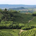 ITA promozione vini negli Stati Uniti