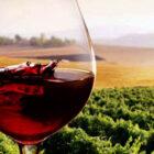 Vino dealcolato, polemiche speciose